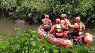 Molly the horse being rescued from the river Douglas