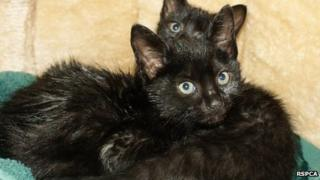 Kittens found abandoned by the RSPCA in Norfolk