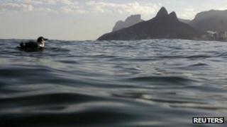 Penguin in the sea off Rio de Janeiro