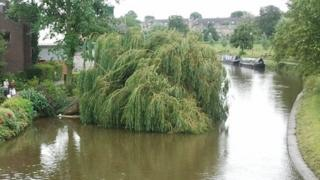 Willow tree in River Cam, Cambridge