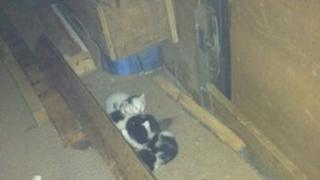 Kittens found in car boot