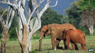 File photo: African elephant