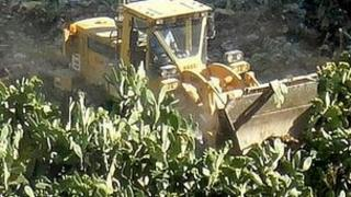 Cactus trees removed from Mezzeh