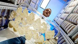 A technician carries slices of a human brain donated for medical research