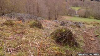 Ant nests on Glenmoriston Estate
