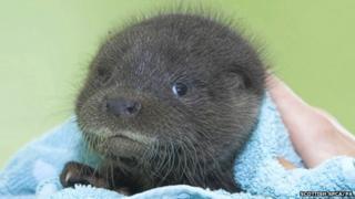 Noah the otter
