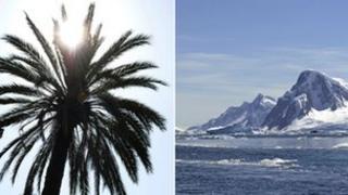 Palm tree and Antarctica