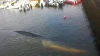 Fin whale stranded in Baltimore Harbour