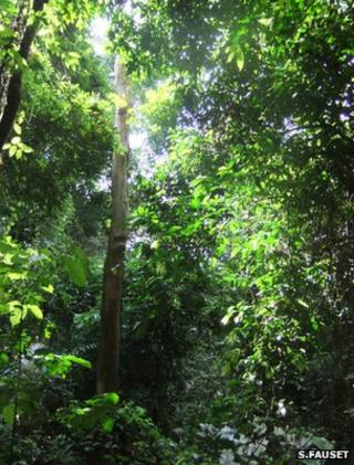 Bobiri Forest Reserve, Ghana (Image: Sophie Fauset)