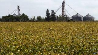 File photo of field of transgenic soy in Argentina