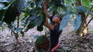 온두라스는 중미에서 2번째로 커피를 많이 생산하는 국가다