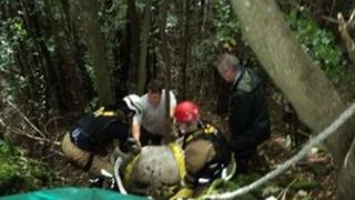 Cow getting rescued