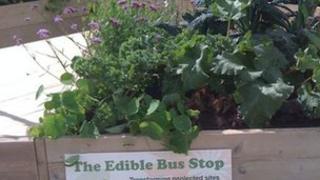 Edible Bus Stop garden box