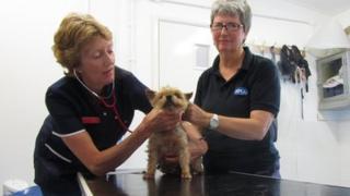 RSPCA Clinic, Ipswich