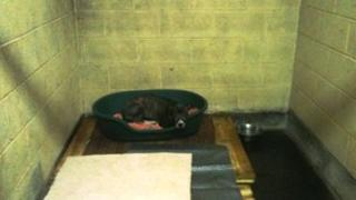 A dog on a pallet at the North Clwyd Anima Rescue Centre