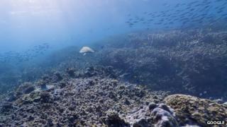 Heron Island, Great Barrier Reef