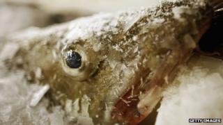 A frozen cod at market
