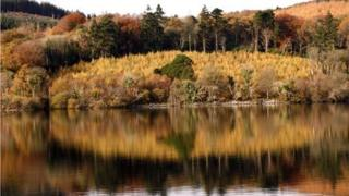 Woods reflected on lake surface