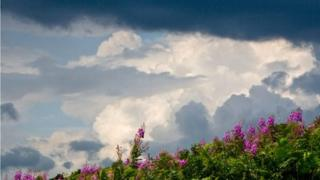 Gathering clouds with wildflowers in foreground
