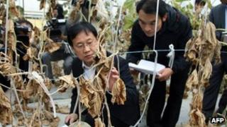 South Korean officials look at withered foliage in Gumi on 5 October 2012