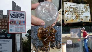 Tsunami debris sign, and debris and sealife found on beach