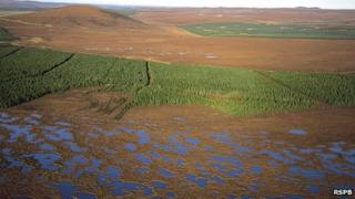 Bog pools and conifer plantation at the Forsinard RSPB reserve