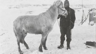 PO Edgar Evans with the pony Snatcher, Cape Evans, October 1911, copyright SPRI