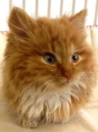 Patrick the kitten