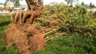 Infected ash trees being destroyed in Leicestershire