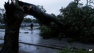 Tree down in Gibara, Cuba. 25 Oct