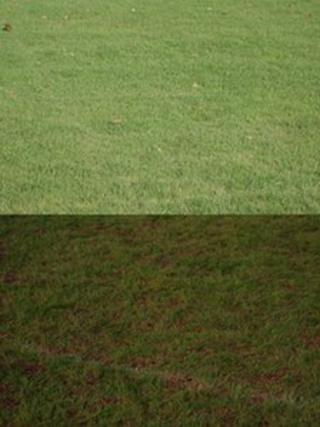 The football pitch before and after