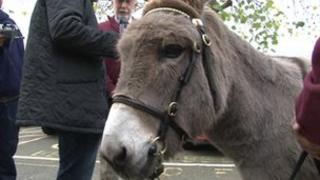 Pollyanne donkey