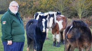 Councillor Peter Morrall with the horses in Welligborough