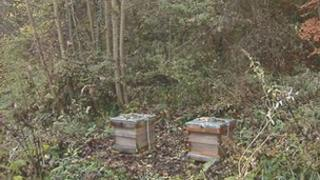 Hives in Portobello