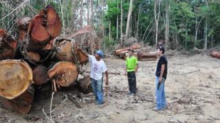 Inspecting illegal logging in PDS Virola-Jatoba