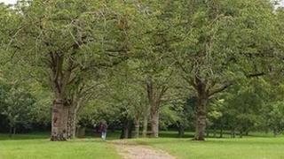 Person walking in Victoria Park