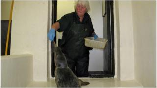 X-factor seals at the MSPCA