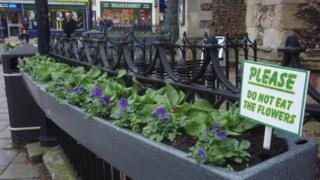 Floral troughs in Sudbury