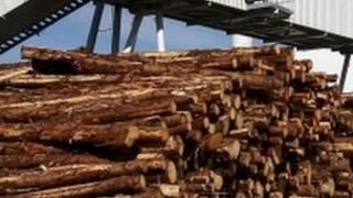 Pren mewn gwaith biomas (generic)