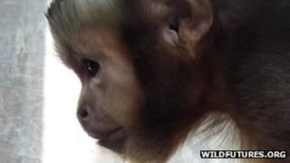 Monkey Sanctuary in Looe