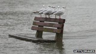 Gulls in Pangbourne, Berkshire