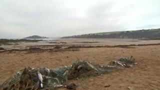 Bass in nets - Bantham, December 2012