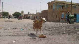 A sheep on a garbage-littered street in Mauritania (archive shot)