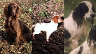 Hampshire dognapping
