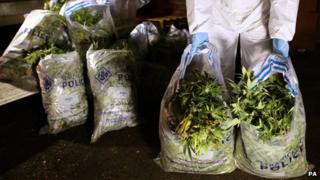 Cannabis seized by Strathclyde Police