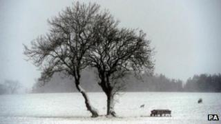 A snow-covered field