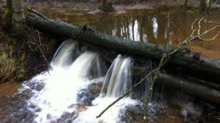 Natural dam designed to slow the flow of flood water