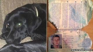 Buster the puppy and the chewed passport