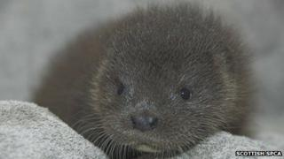 Otter pup Cally