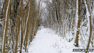 Sheep Path Wood, Stinchcome Hill by John Wilkes
